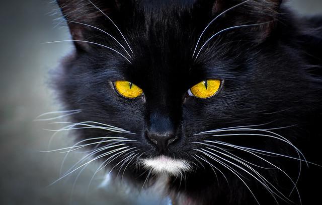 Mikey the Kitten, Nikon D750, Sigma 70-300mm F4-5.6 DG OS