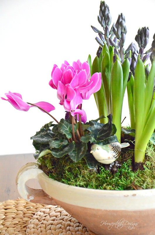 Dish Garden-Housepitality Designs-5