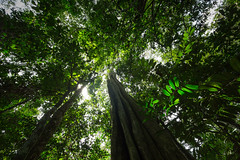 Forest of Lobéké National Park, Cameroon