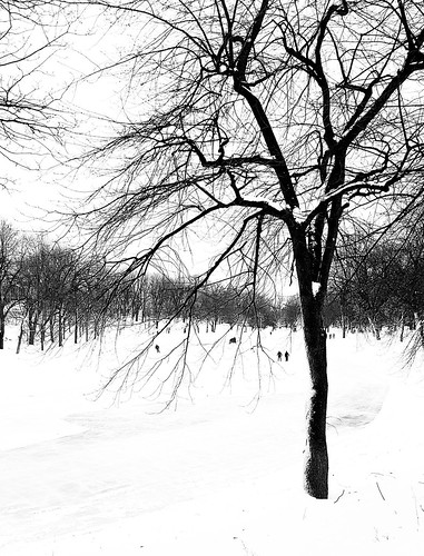 Parc La Fontaine Skating 2