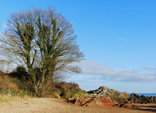 lone tree rosemarkie black isle scotland east coast sand colours rocks low view blue sky weather blaze bare allanmaciver