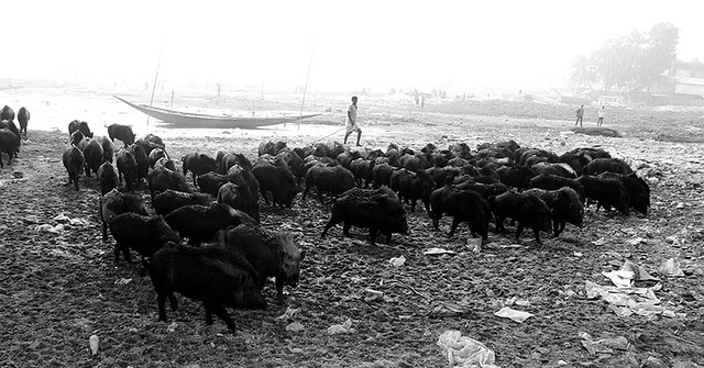dying river - pigs', Canon EOS KISS X7I, Canon EF-S 18-55mm f/3.5-5.6 IS STM
