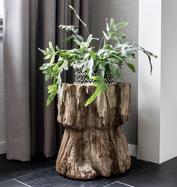 Plant op boomstam