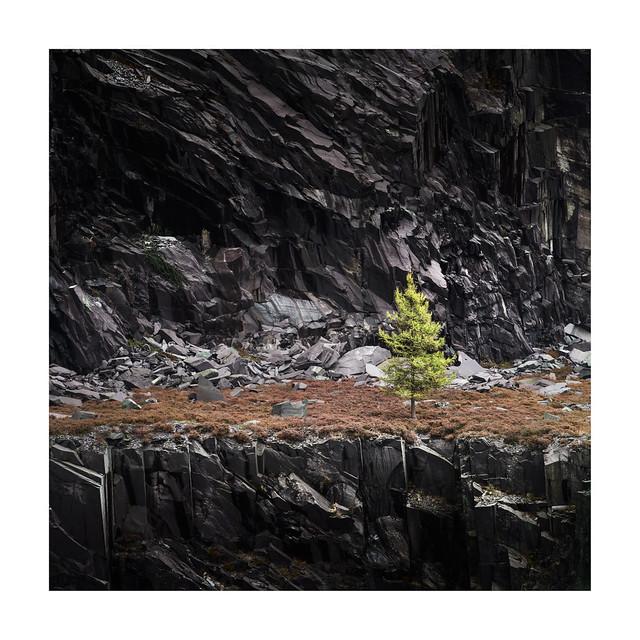 Dinorwic Tree 22 October 2017