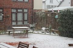 Garden Snow ( 2 ) .