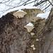 Fungi in the Snow