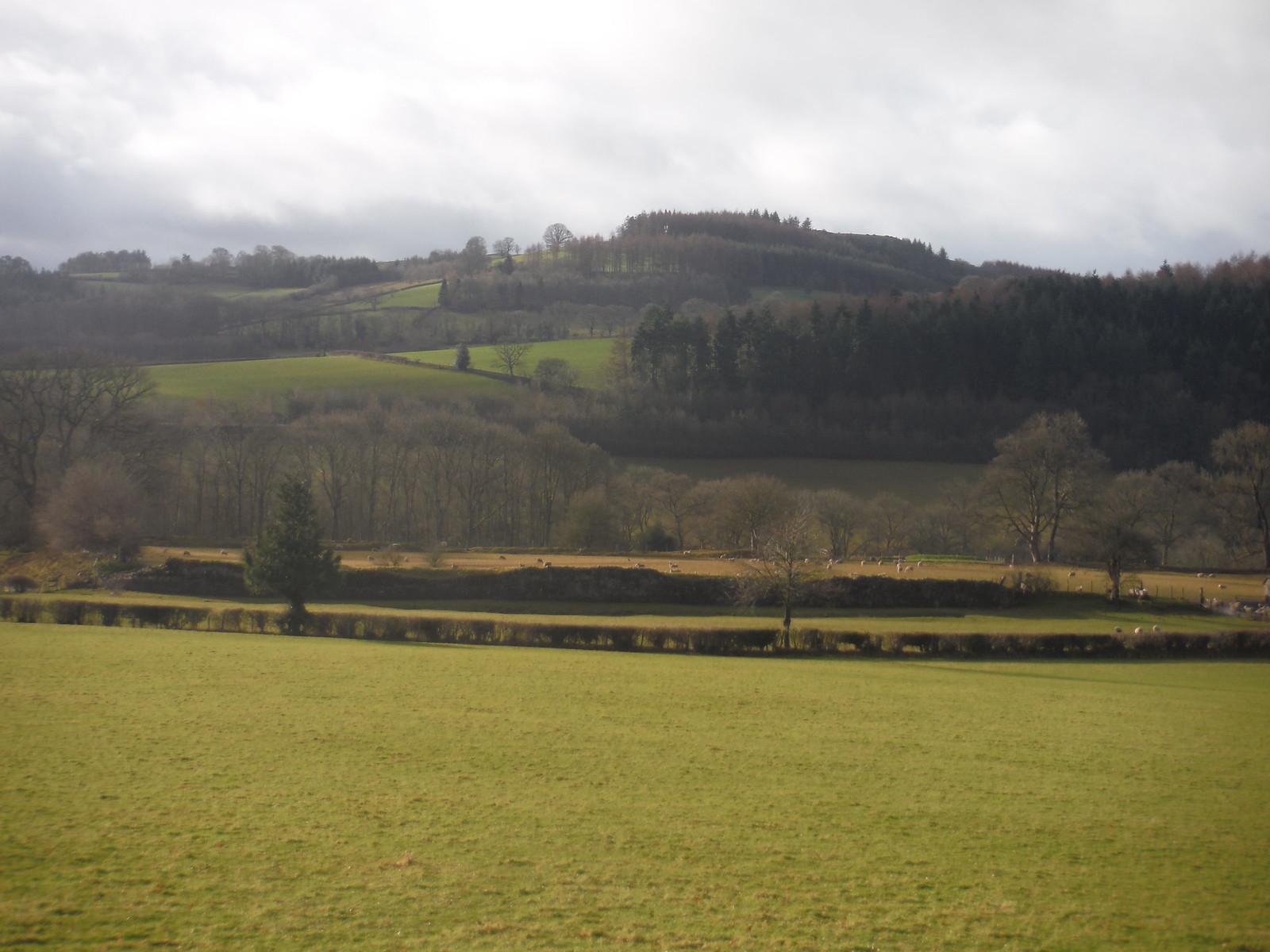 Remnants of Y Gaer (Cicucium Roman Fort), with Twyn y Gaer behind SWC Walk 306 - Brecon Circular (via Y Gaer, Battle and Pen-y-crug)