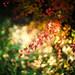 fire bush-3 by sebboh