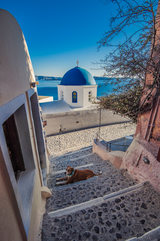 A dog in Oia