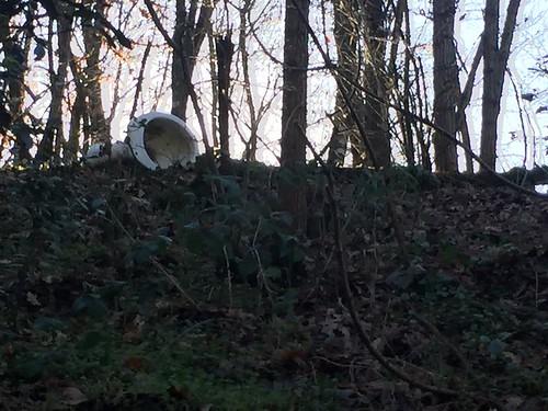 Il bosco di via di Vinacciano una discarica a cielo aperto foto di Carlo Quartieri