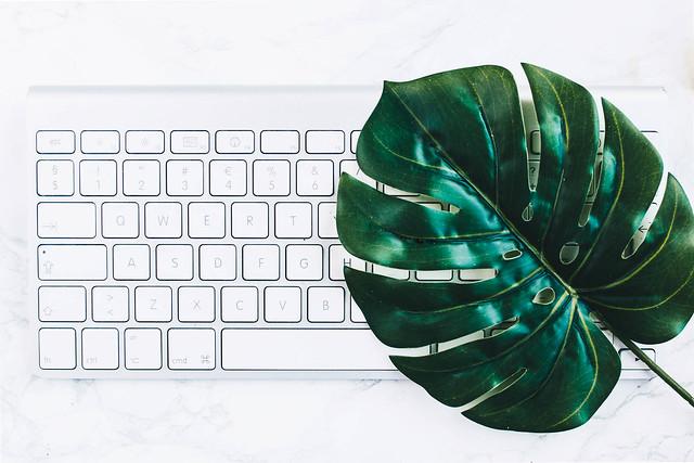 Minimalistic flat lay with key board and a green leaf