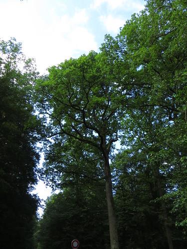 20140804 02 100 Jakobus Wald Bäume