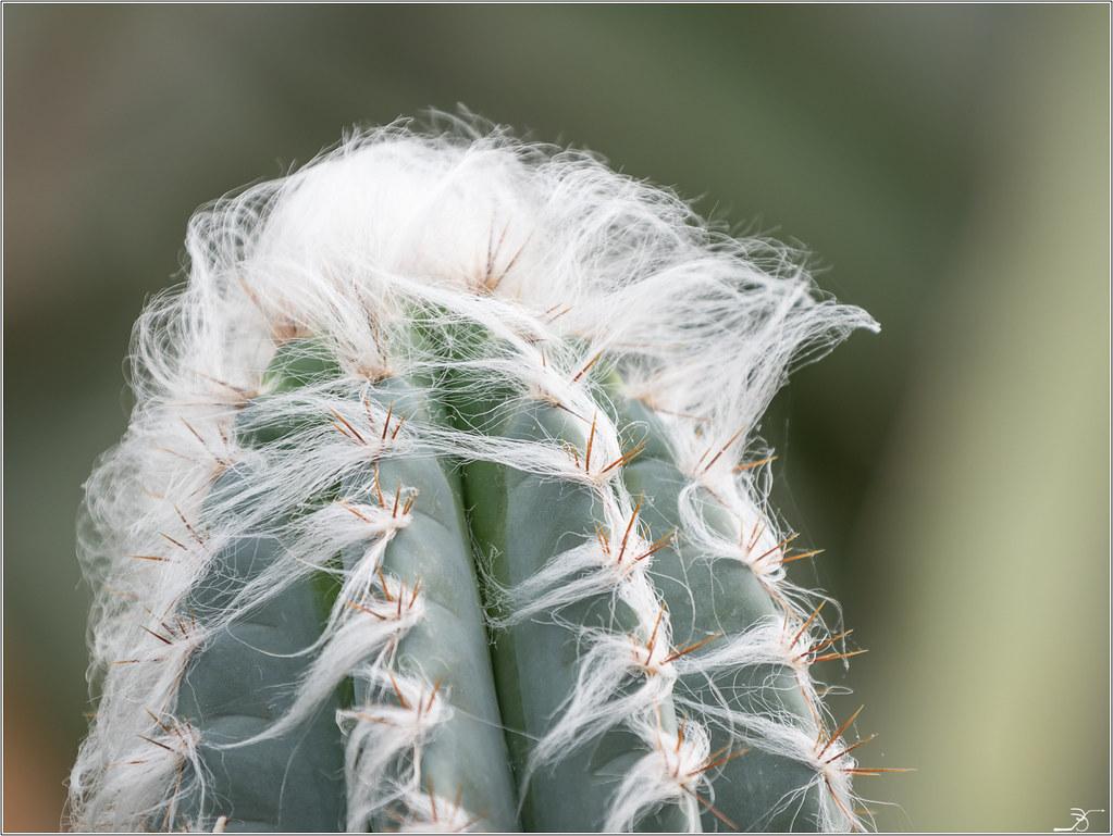 Fleurs des serres 39775558771_d116507510_b