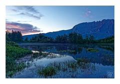 Marre à Poules d'eau - Île de La Réunion