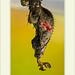 Heliconius herato - Red Postman por J. Amorin