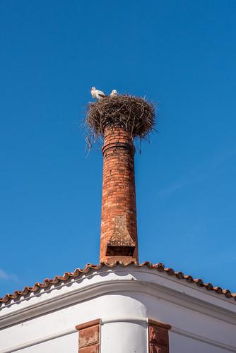 White Storks Nesting on a Chimney