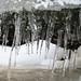 Winter Beast by Gregory Pleau