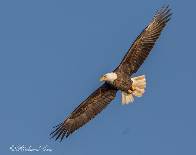 Eagle 2018 F