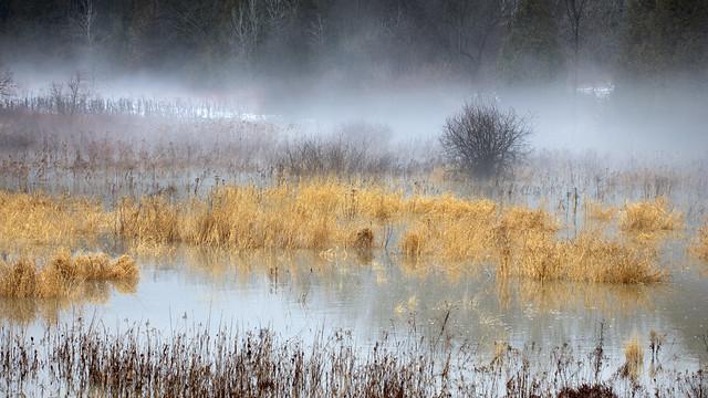 Fog Swamp