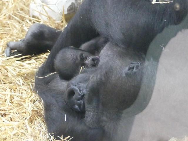 Tuana und Baby, Wilhelma