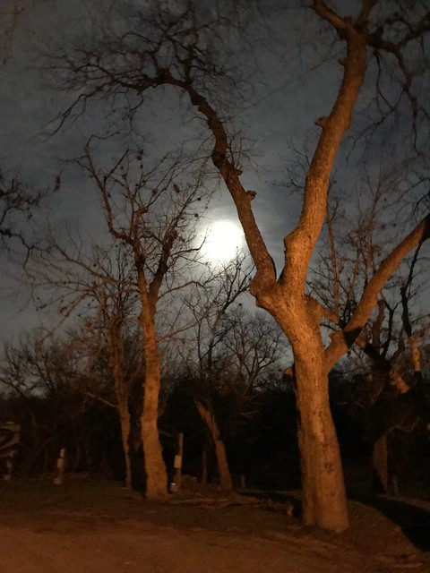 San Antonio - Trees and moon