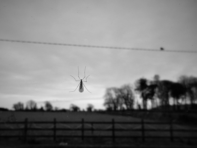 First Fly Day Friday Fly of 2018 (Explored)