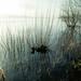 Misty Reservoir