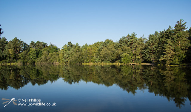 Moat pond at Thursley