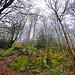 Wet Woods  Staveley Cumbria