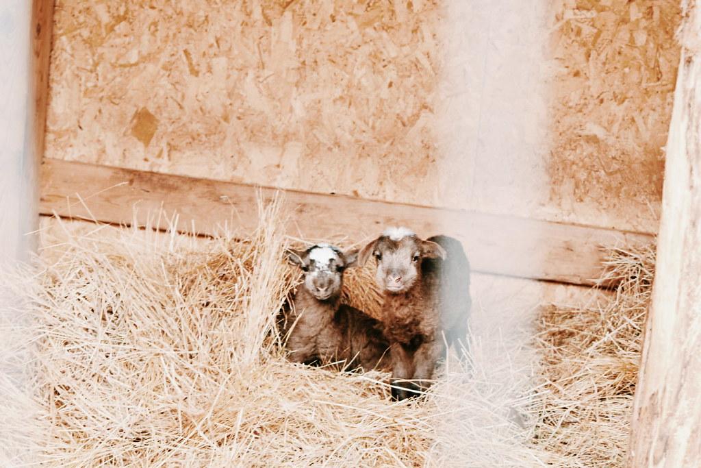 Farm life. February 2018
