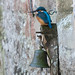 Kingfisher on the Palace Bell by Mukumbura