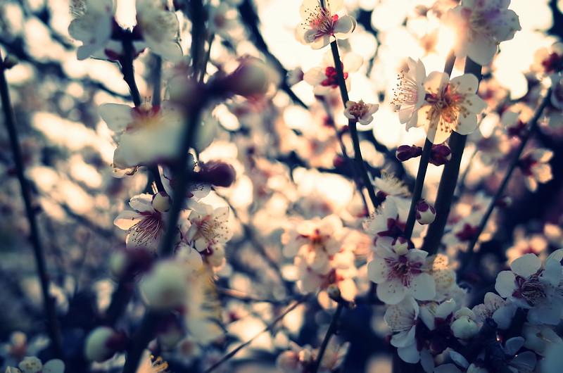 早春の夕方