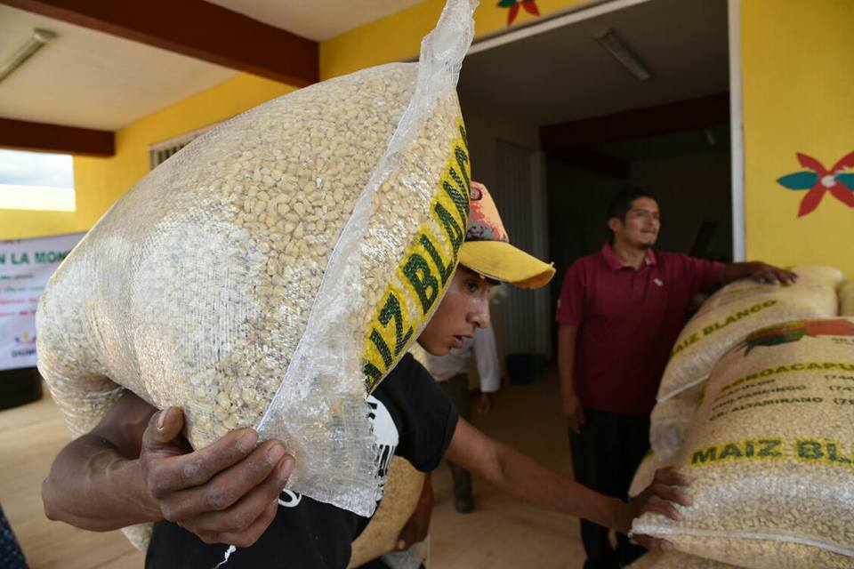 Que llueva maíz en la montaña de Guerrero