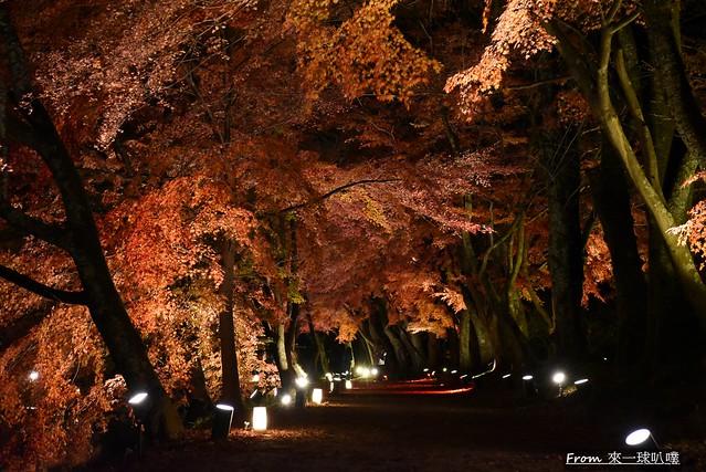 大覺寺夜楓-真紅の水鏡25