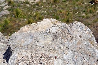 Chalk badlands (Niobrara Formation, Upper Cretaceous; chalk bluffs south of Castle Rock, Gove County, Kansas, USA) 3