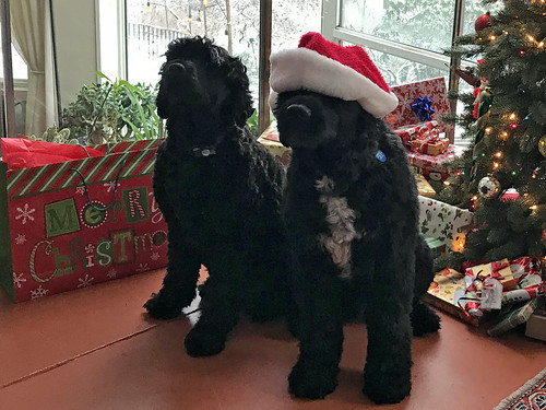 Merry Christmas from Suzie and Charley IMG_1274