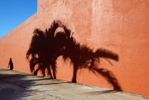 Shadow of a palm tree against an orange wall in Huatalco, Mexico