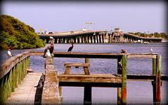 2014-09-01_IMG_2850_Anna Maria Isl. Bridge ...Holmes Beach,Fl.