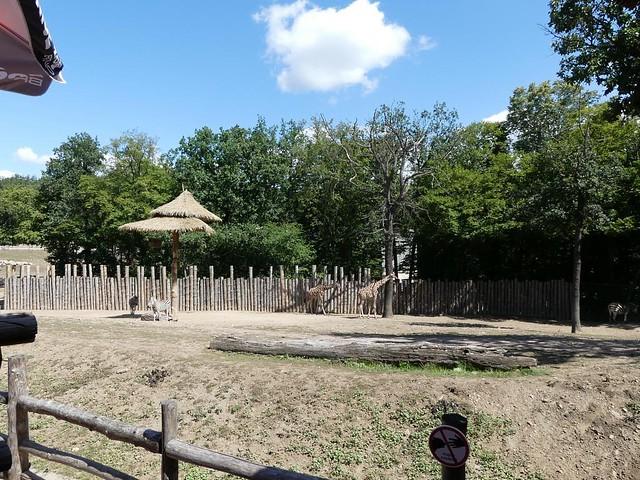 Afrikasavanne, Zoo Brno