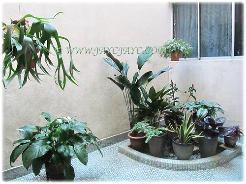 Our courtyard that is mostly packed with foliage plants