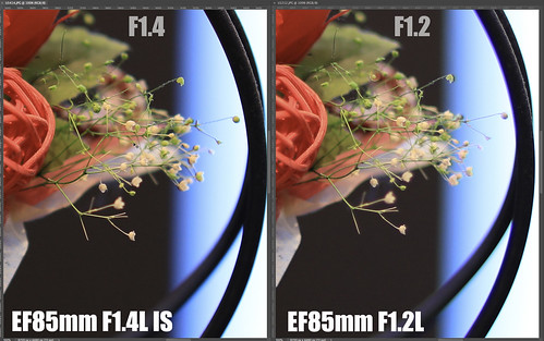 EF85mm F1.4L IS vs EF85mm F1.2L_08
