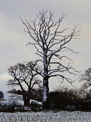 HolderSkeleton Tree