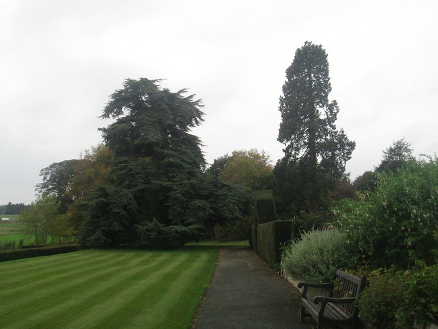 Hill of Tarvit House Trees
