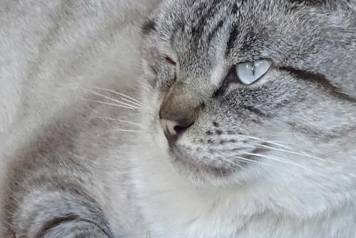 gato-01