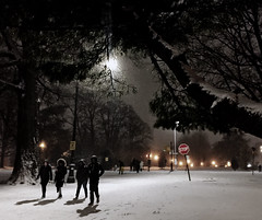 Snowy night in Prospect Park