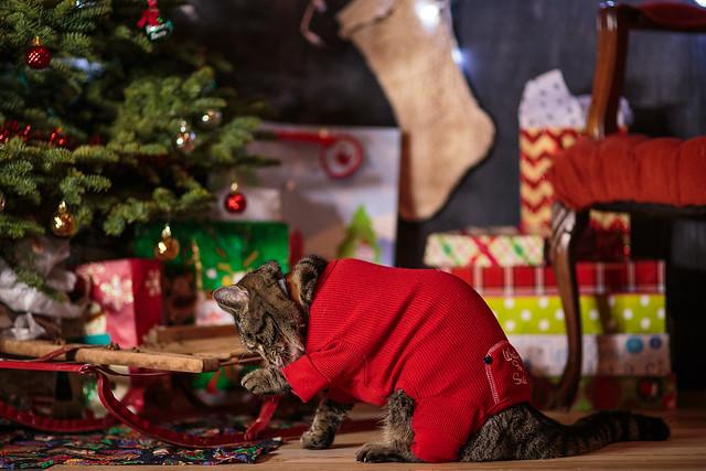 Christmas-7224
