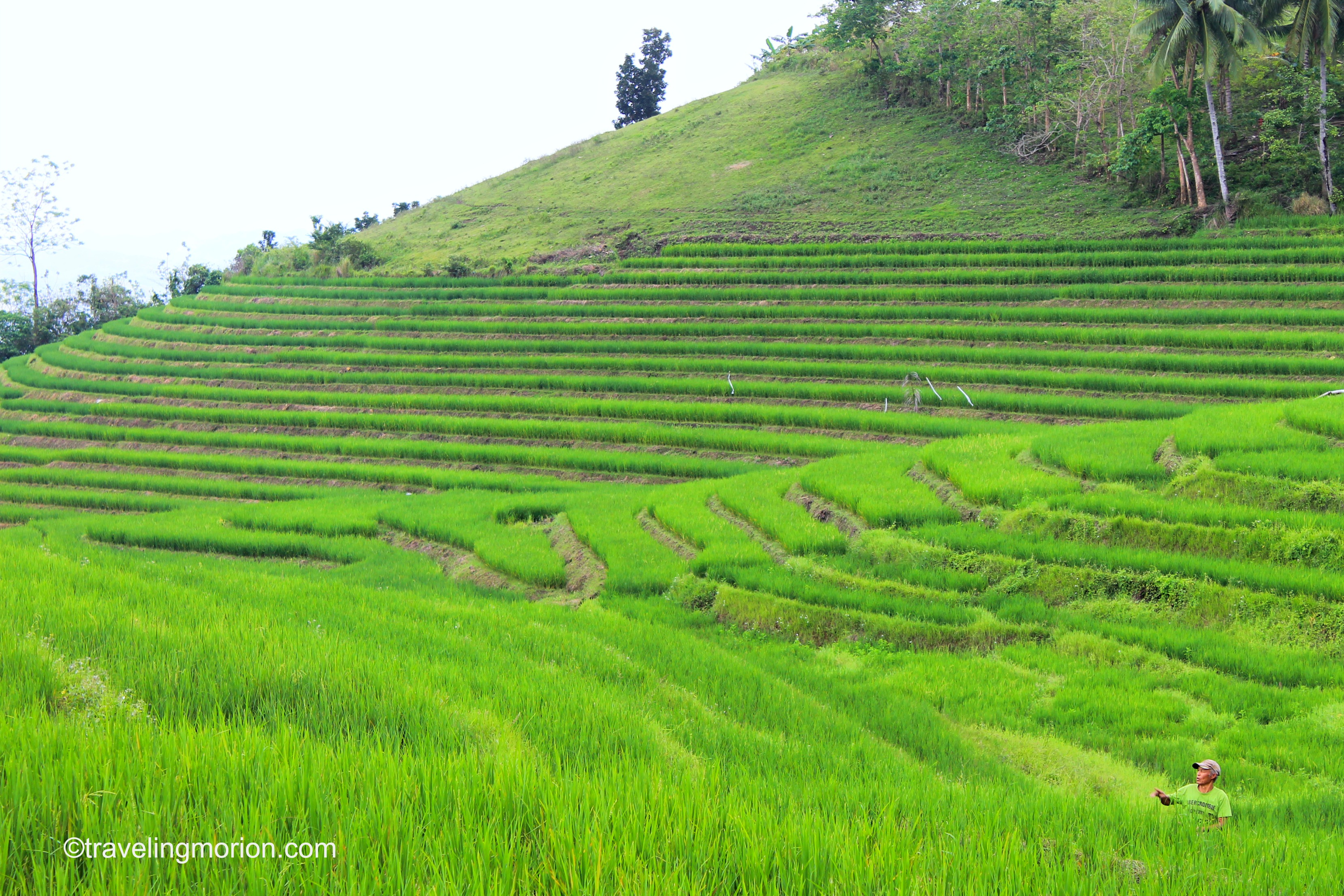 Cadapdapan Rice Terraces in Bohol