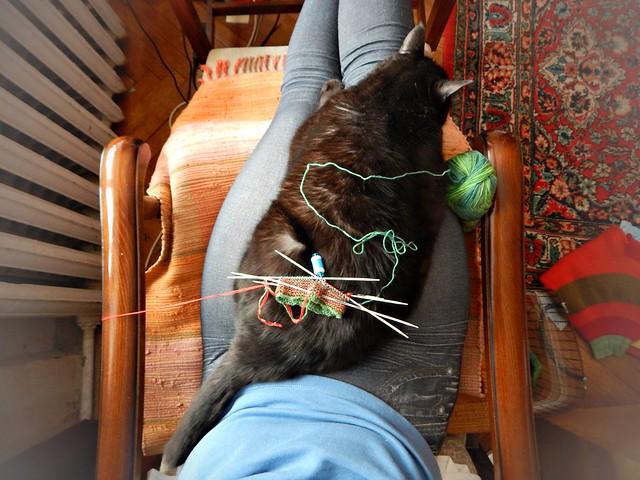 Чёрный кот Муся и вязание | HoroshoGromko.ru