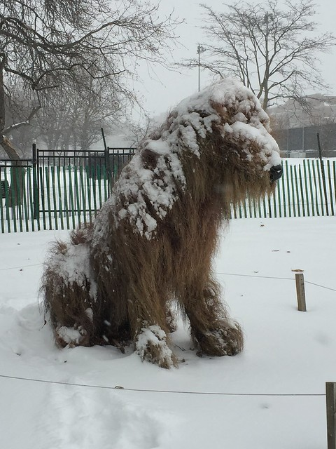 Snowy Coat