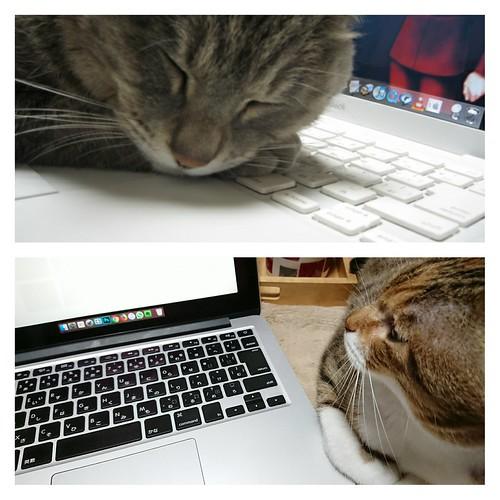 平気で枕にしたななと、遠慮気味のはな by Chinobu